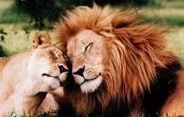 Cuddling... The greatest drug