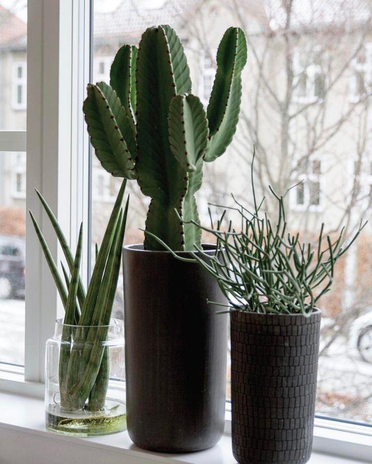 """341 Synes godt om, 1 kommentarer – Design Nest CPH (@designnestcph) på Instagram: """"Spikes on a row... #kaktus#suculents #plants #planter #grønneplanter #grøn#blomster #vindueskarm…"""""""