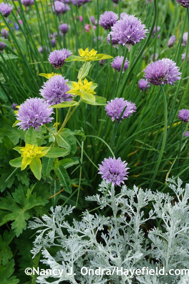 1416 besten Greatest Plant binations Mooiste Plant