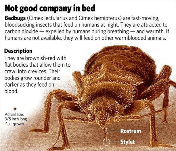 19 best stop bed bugs images on pinterest bed bugs bed for How to treat barn wood for bugs