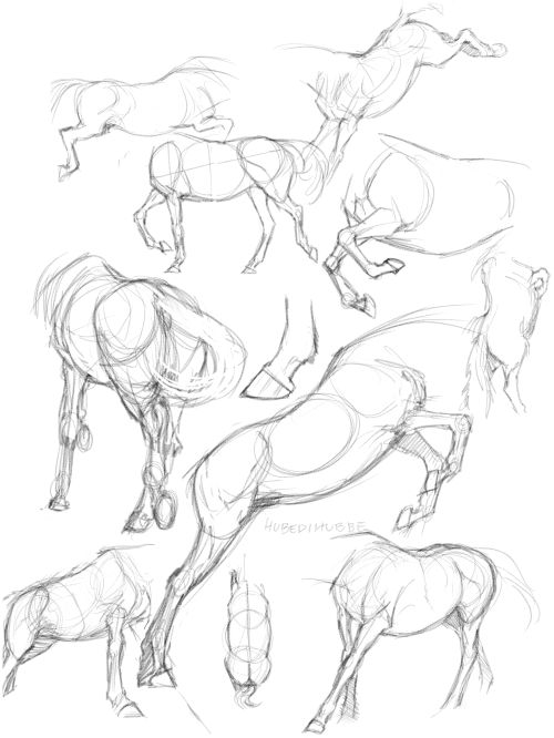 Horse bodies, 06/01-15 notes; The legs are shorter than you think! Is something off-looking? Shorten the legs.