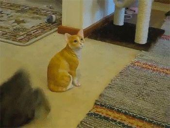 Surtando com o novato http://www.megacurioso.com.br/animais/46954-divirta-se-com-estas-27-imagens-e-gifs-de-gatos-naturalmente-antipaticos.htm