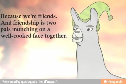 Llamas with hats friendship quote / iFunny :)
