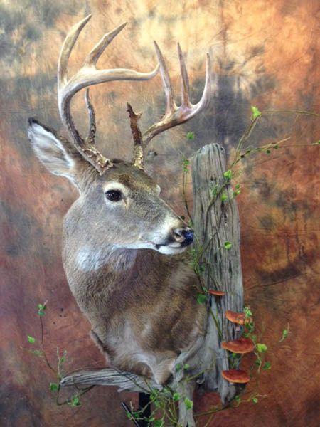 Taxidermy Habitat Snow   white tail habitat deer head natural habitat deer head…