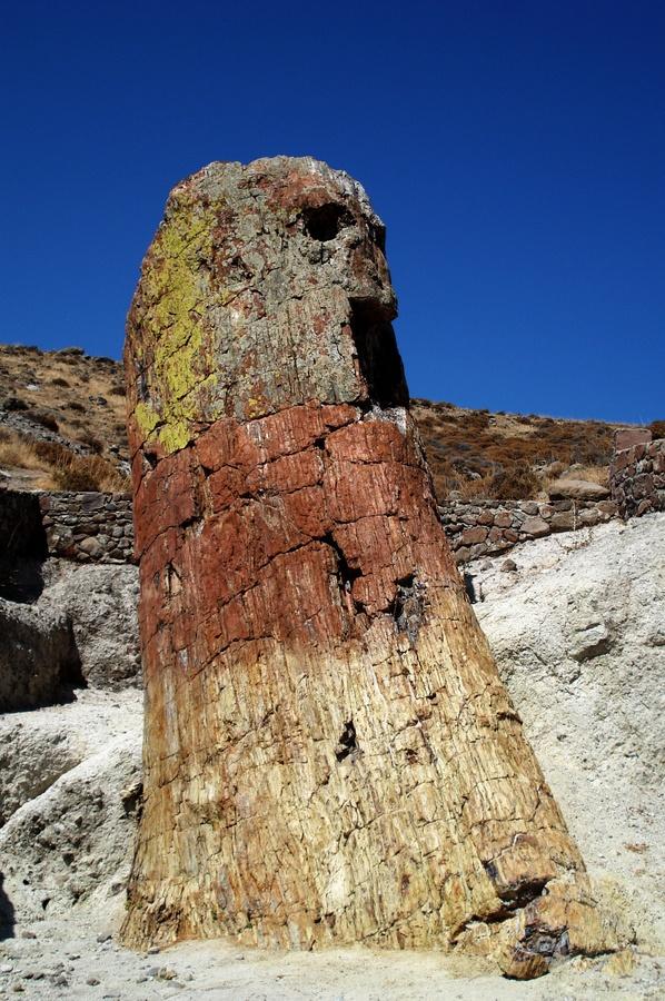 El bosque petrificado de 20 millones de años en Lesvos.