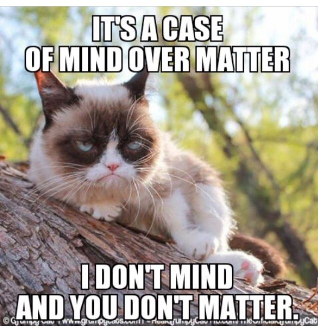 That S The Right Answer Meme Grumpy Cat
