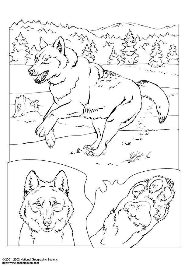 97 best Coloring Pages images on Pinterest   Coloring books ...