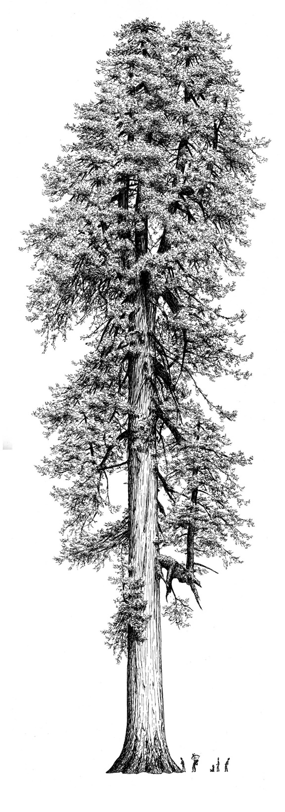 Love the correct scaling of the sizing (tree - people (bear)).