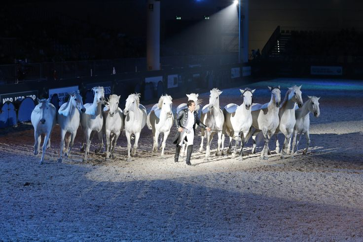 #lorenzo #gala #cavalli #horses