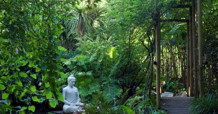 5 Winterharte Pflanzen Fur Den Dschungelgarten Den Dschungelgarten Fur Pflanzen Winterharte Winterharte Pflanzen Winterhart Buddha Garten