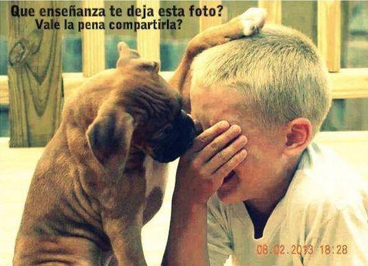 Estudio comprueba que perros sienten el dolor humano y tratan de consolarnos.