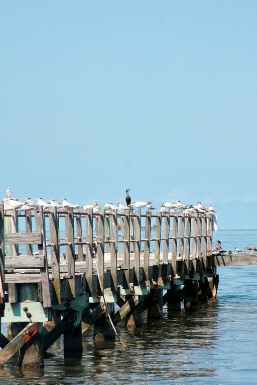 17 best images about cedar key state of mind on pinterest for Cedar key fl fishing
