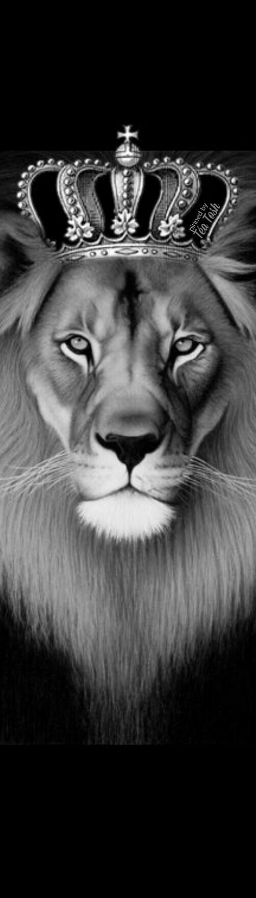 best leão preto e branco images on pinterest
