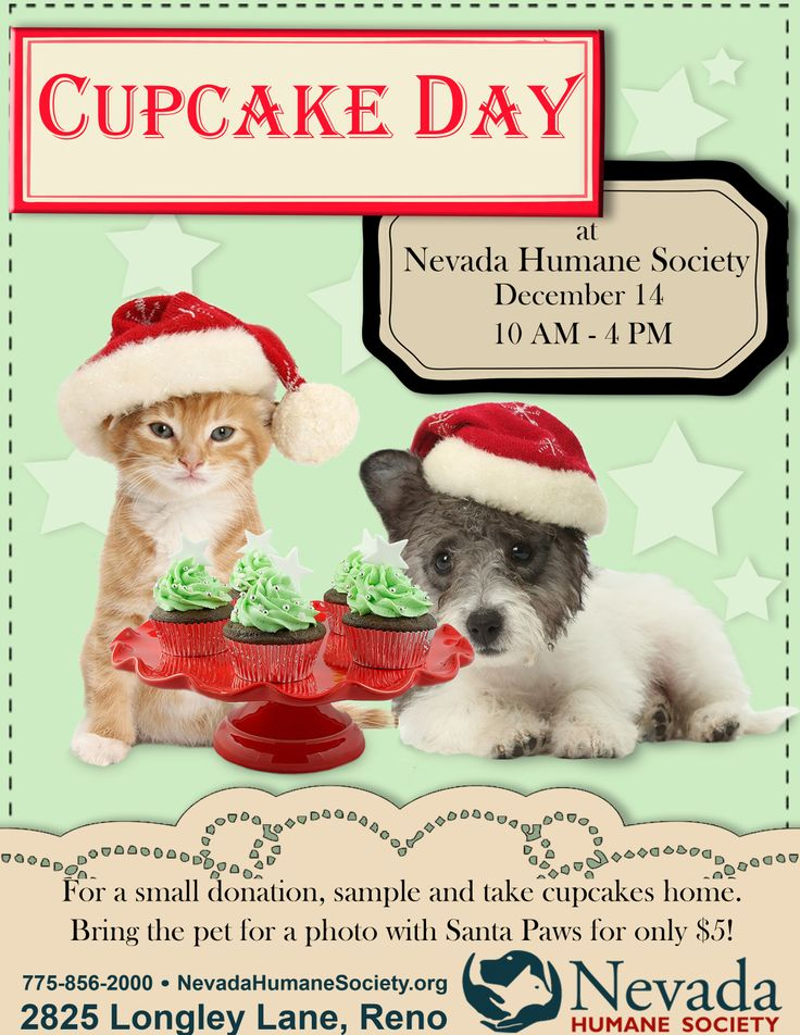 33 best nhs events and fundraisers images on pinterest fundraisers our annual cupcake day and pet photos with santa paws solutioingenieria Image collections