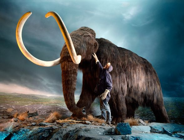 ...  as extinct prehistoric animals go, woolly mammoths seem to run second only to dinosaurs for public interest. Description from donsmaps.com. I searched for this on bing.com/images