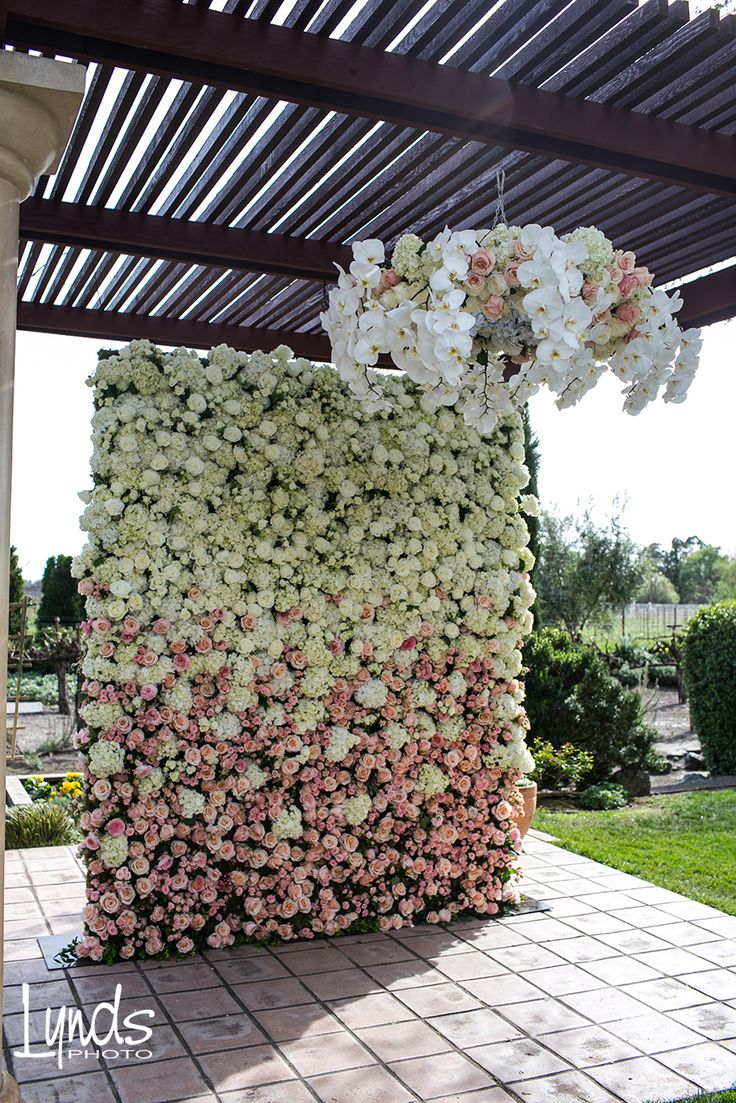 Ombre #flowerwall @Vintner's Inn with fresh flower chandelier above... dreamy. Designed by Anita @Wine Country Flowers Wedding under the trellis at Vintner's Inn John Ash & Co www.winecountryflowers.com