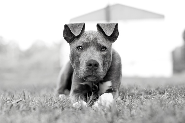 438 best Color splash images on Pinterest Doggies, Drawings and
