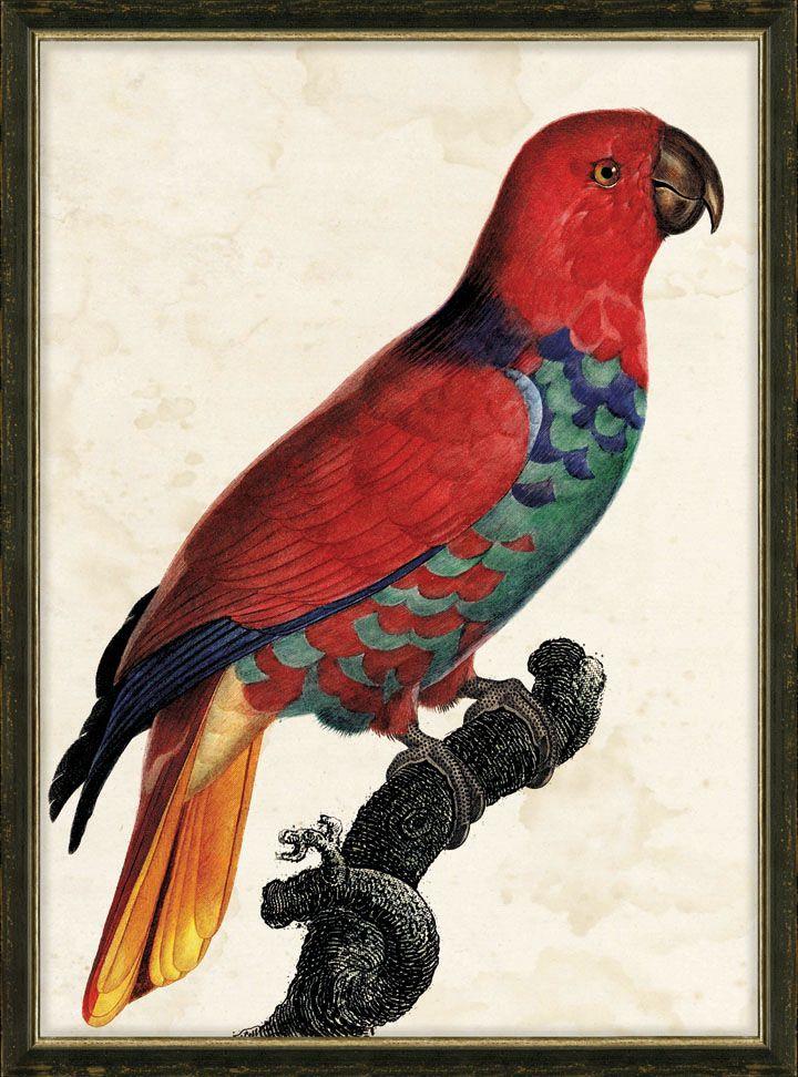 Parrot Home Decor