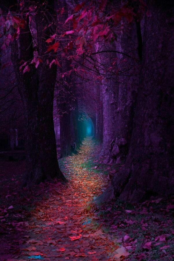 Purple pathway to the fairy  realm