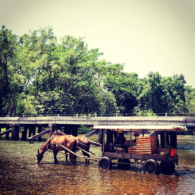 My Growing Appreciation of Spanish Lookout #Culture #Belize #Travel #Mennonites