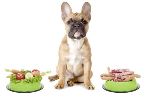The 16 Best Raw Meat Dog Food Suppliers You Need To See Dog Food
