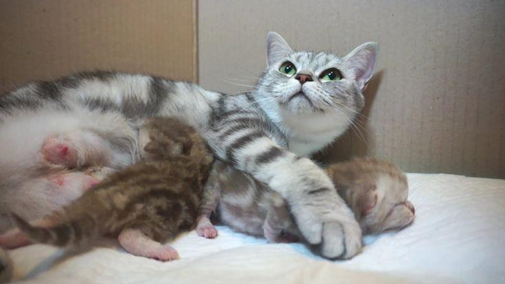 [Suri&Noel cat story] EP28 - 안아줘요 (Hold me tight.)