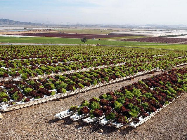 48 Best Images About Commercial Hydroponics On Pinterest