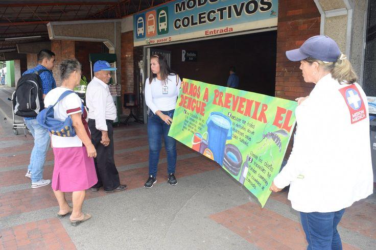 Neiva le declara la guerra al mosquito Aedes Aegypti - La Nación.com.co