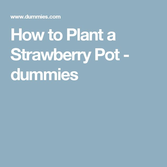 1000 ideas about strawberry pots on pinterest outdoor - How to plant a flower garden for dummies ...