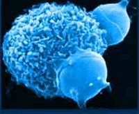 Immunforsvaret er den komplekse interaktion mellem hvide blodceller, antistoffer, hormoner, proteiner, enzymer og inflammatoriske molekyler kaldet cytokiner, der alle samarbejder for at beskytte din krop fra de sygdomsfremkaldende organismer og parasitter, der konstant angriber den.