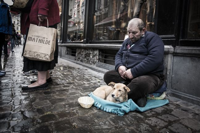 Homeless Man With Street Dog In Brussels Belgium Street Dogs St Gilles Dogs