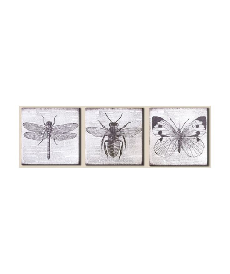Buy Graham & Brown Vintage Bugs Canvas Wall Art - Set of 3 at Argos.co.uk - Your Online Shop for Pictures and wall art. #ArgosRoomInspiration