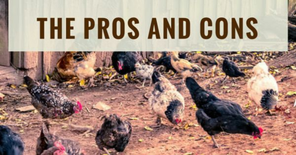 The Pros and Cons of Free Range Chickens   Chickens ...