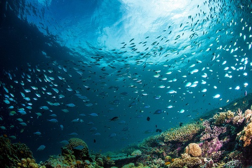 fish swarm by Paul Cowell on Flickr.
