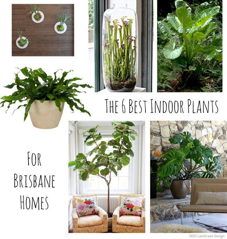 Best 25+ Low maintenance indoor plants ideas on Pinterest | Indoor ...