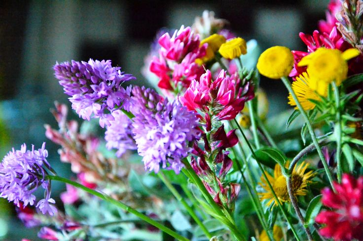 italiancountryside#flowerpower#www.cabiancadellabbadessa.it#
