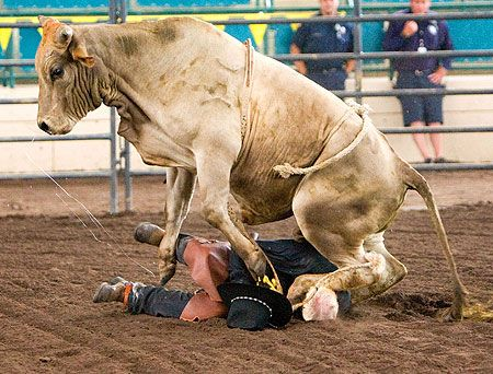 pictures of famous rodeo bull riders - Bing Images....looks like the bull is trying to turn the table, which becomes dangerous