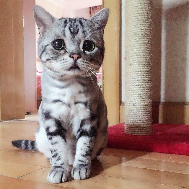 Luhu är den sorgsna katten som kommer få ditt hjärta att brista. https://delbart.se/sorgsen-katt/