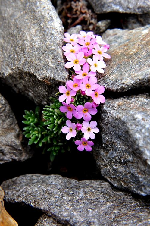 rock garden, use sedum and other flowering drought tolerant plants for a pop of color.