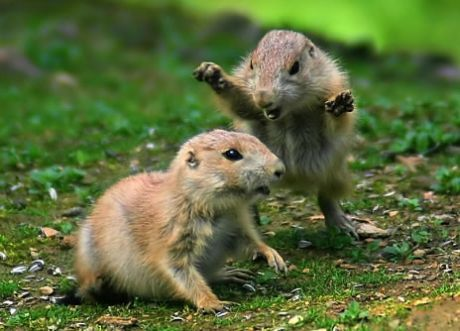 forest animals photos - Google Search | Nature | Pinterest ...