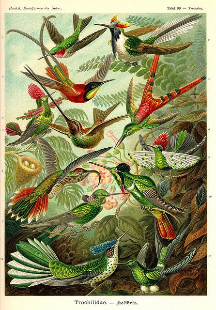 Ernst Haeckel ~ Art Forms in Nature #topshoppromqueen