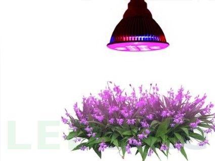 12W E27 LED Kasvatusvalo - LED Kasvatusvalot