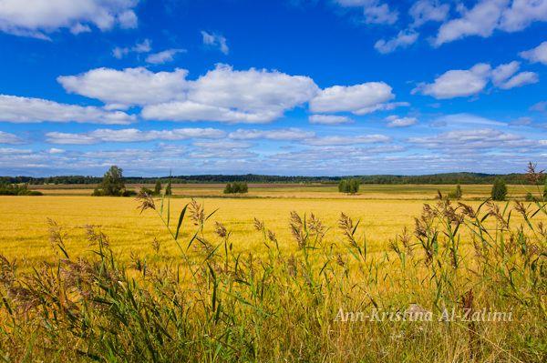 by Ann-Kristina Al-Zalimi, field, finland, open landscape, saltfjärden, autumn