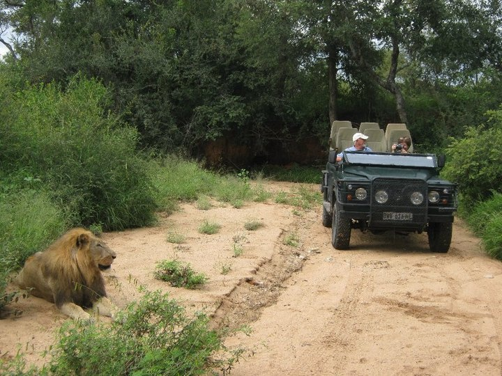 Game drives in the bush