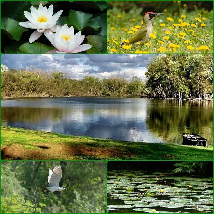 A Szikra és az Alpári-rét a Tisza természetes és mesterségesen létrehozott holtágainak helye a Kiskunsági Nemzeti Parkban. A Kecskemét közelében található Tőserdő ártéri erdeiben találkozhatunk a zöld és a szürke küllővel, valamint a víz felszínén a látványos fehér tündérrózsával és a sárga virágzatú vízitökkel.