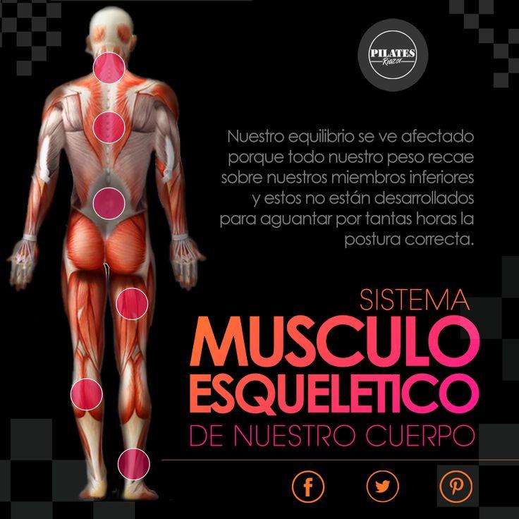 Nuestro sistema muscular participa en la generación del movimiento tanto externa como internamente. La mayoría de estos movimiento implica el uso de más de un grupo muscular que a su vez tiran de los tendones conectados a los huesos. Este sistema se llama musculoesquelético y está formado por los músculos, tendones y huesos de nuestro cuerpo.