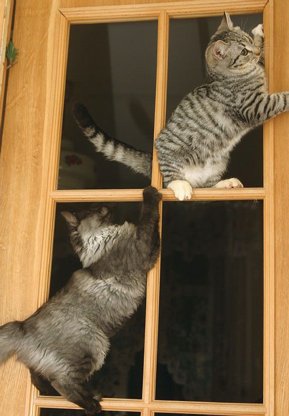 this remind me of the trip to Russia where we would always see two kitties sitting in the window of the apartment across from us....so cute :)