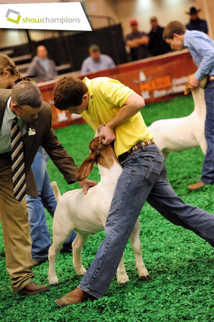 Junior Market Goat Show at the Houston Livestock Show and Rodeo