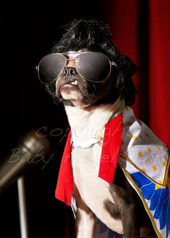 the king said values are like fingerprints nobodys are the same boston terrier costumeboston terrier halloweenboston - Halloween Costumes In Boston