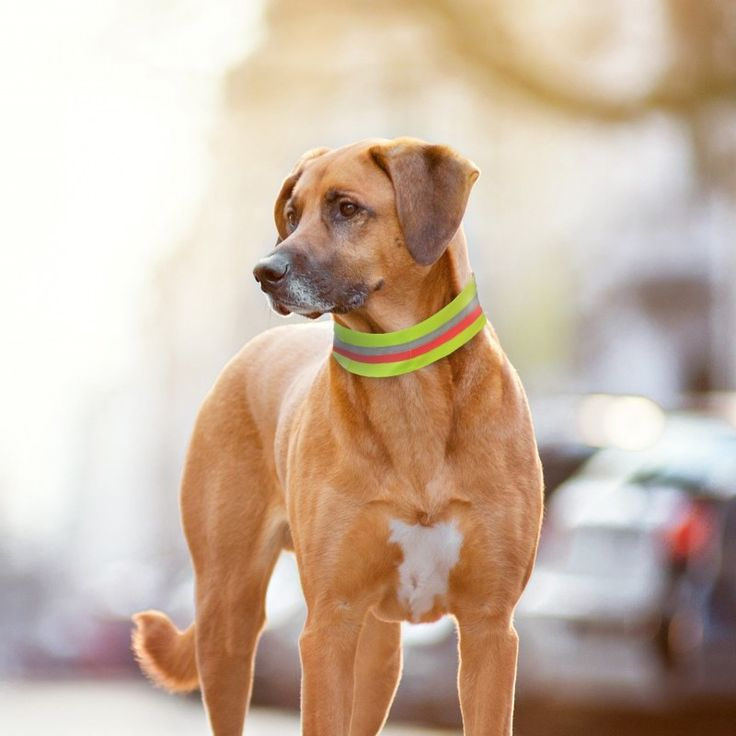Our reflective collar bands are perfect to keep your pet safe, it has a pocket for our GPS tracking device.